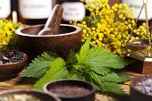 Fresh medicinal herbs