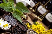 Herbs medicine