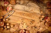 Autumn Still Life With Pomegranates