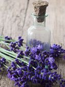fresh lavender oil