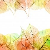 Frame of Autumn color transparent Leaves - isolated on white background, copy space