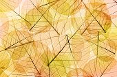 Autumn Leaves yellow and orange Background - transparent cell structure
