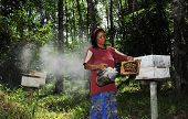 A Beekeeper Fogging/smoking The Bees Away From The Hive
