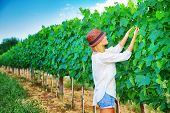 Farmer girl on Italian vineyard, cultivate grape, enjoying fruit harvest, agricultural field, winery