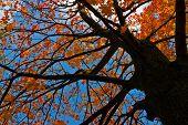 Tree Foliage Looking-up