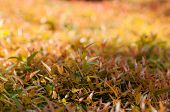 Spring Grass In Sun Light And Defocused