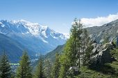 Pine woodland in French countryside with Mont Blanc mountain range in the background