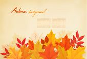 Abstract autumn background with colorful leaves. Vector illustration.