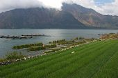 Rice Field, Lake And Mountain