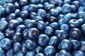 Delicious blueberries close-up