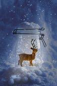 Reindeer ornamental figure in glass snow globe at night