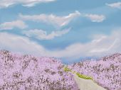 Romantic Background With Lavender Meadow