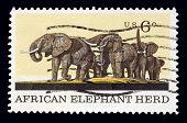 Elephant 1970