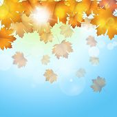 Autumn Leaves Blue Background