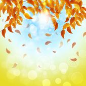 Multicolor Autumn Background