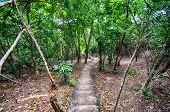 Stairs through jungles