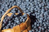 Lot Of Fresh Blueberry With Full Bast Basket, Selective Focus