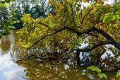 Tree Falling Into Water
