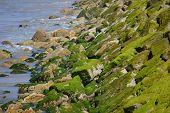 Another green moss on the big stones by the ocean