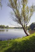 Romantic lake view with lonely tree