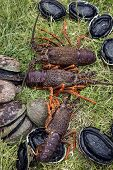picture of caught  - Spiny crayfish  - JPG