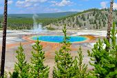 Midway Geyser Basin Seen Through The Conifer Trees In Yellowstone National Park, Wyoming