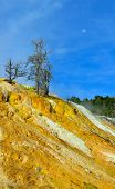 foto of walking dead  - Dead trees and the moon in Mammoth Hot Springs area of Yellowstone National Park Wyoming - JPG