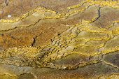 Spring Bed With Artistic Pattern In Mammoth Hot Springs Area Of Yellowstone National Park, Wyoming
