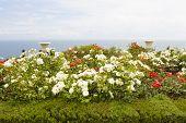 Rose Garden On Sea Shore