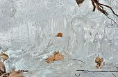 Leaves In Melting Ice