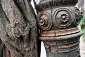 Creeper Plant And Rusty Pole
