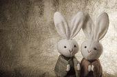 couple Japanese rabbits