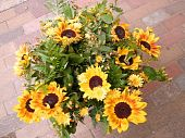 Or Yehuda Bouquet Of Sunflower 2010