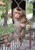 A Little Sad Monkey