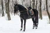 Black Horse in Winter
