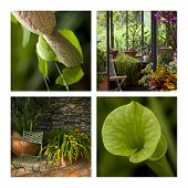Exotic Plants And Greenhouses