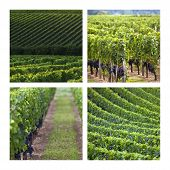 foto of bordeaux  - Collage of vineyards at Saint - JPG