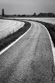 Country road through paddy fields. BW image