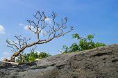 Plumeria On Blue Sky