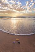 Shells On The Beach At Wanda