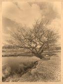 Tree next to a Pond
