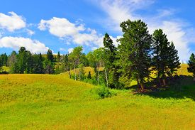 stock photo of blacktail  - Blacktail Plateau in Yellowstone National Park Wyoming in summer - JPG