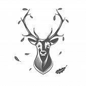 stock photo of deer head  - Deer head with oak leaves isolated on white background - JPG