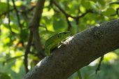 pic of lizard skin  - Beautiful lizard sitting on a tree in the wild - JPG