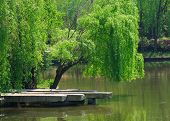 picture of pier a lake  - Trees overhanging a stone pier on a small lake at the Shanghai Wild Animal Park on a sunny day - JPG