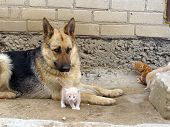 The Dog And Kitten