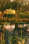 Reflection Of Tree And Medow