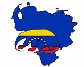 Anteater  Venezuela