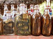 botellas de licor con serpientes y ciempiés