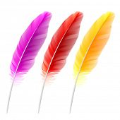 Colored feathers. Vector.